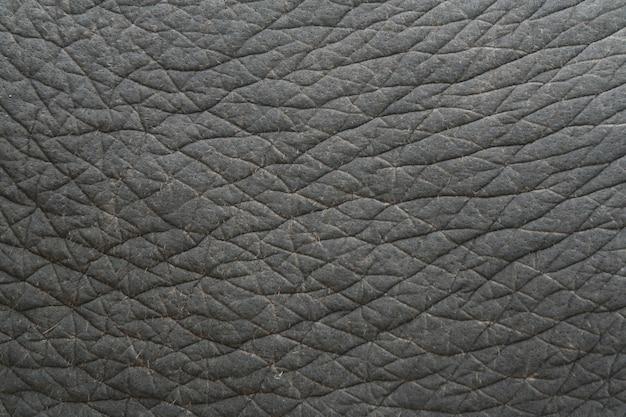 Textura de la piel del elefante, tailandia