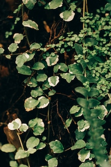Textura de plantas de la selva