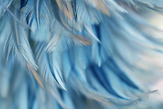 Textura de la pluma de los pájaros del pájaro de la falta de definición para el fondo