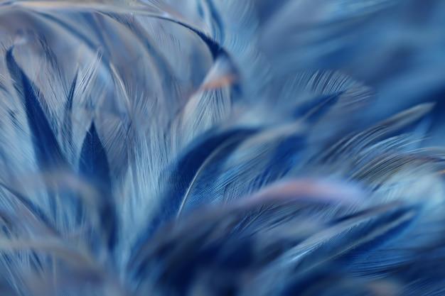 Textura de plumas de aves de blur bird para el fondo