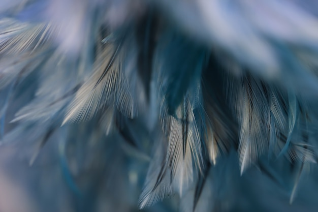 Textura de plumas de aves pollos para el fondo, fantasía