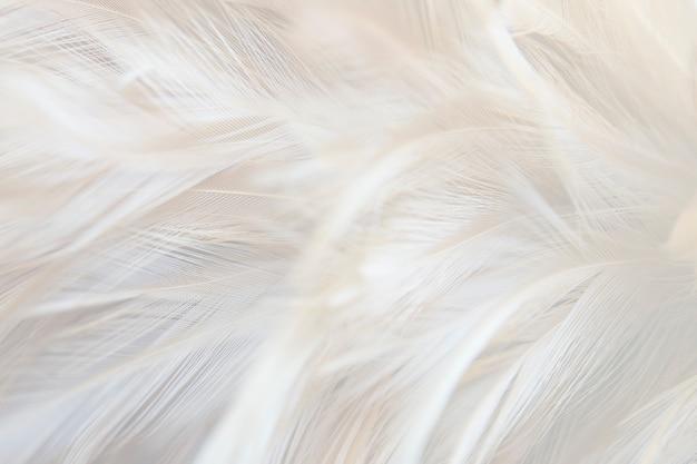 Textura de plumas grises mullidas