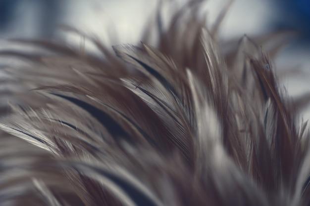 Textura de plumas de pollos para el fondo