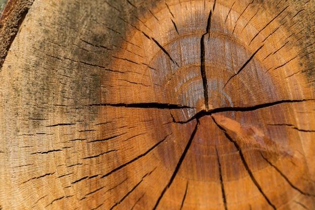 Textura de primer plano de un árbol frutal