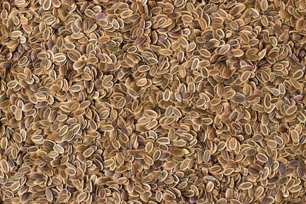 Textura de primer plano de semillas de eneldo, especias o condimentos como fondo