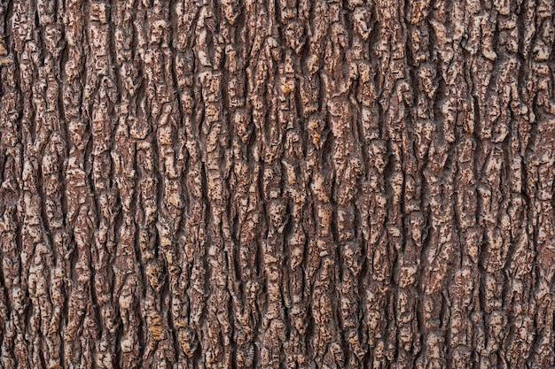 Textura de relieve de la corteza marrón de un árbol de cerca