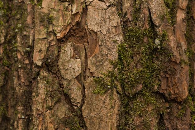 Textura en relieve de la corteza marrón de un árbol con musgo verde y líquenes. panorama circular ampliado de la corteza de un roble