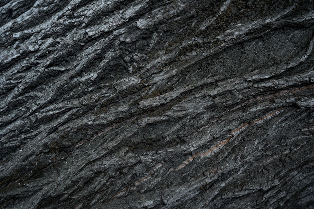 Textura de relieve de la corteza oscura de un árbol de cerca