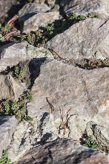 Textura de una roca con musgo