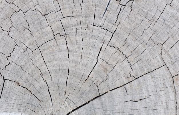 Textura de sección transversal de madera
