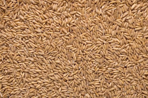 Textura de semillas de avena entera cruda