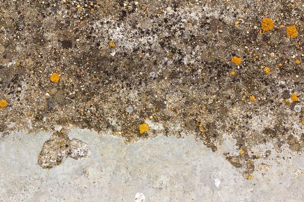 Textura superficial de cemento con líquenes.