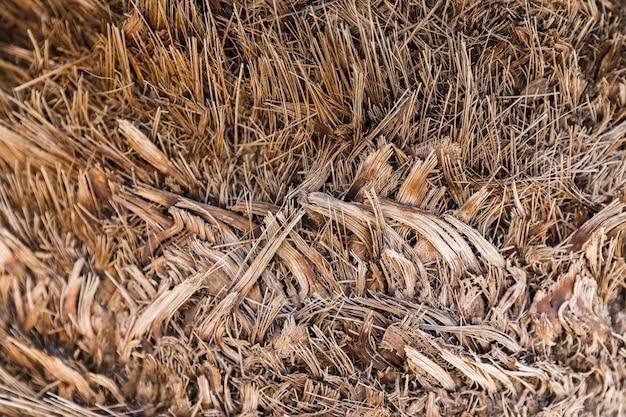 Textura de vegetación natural
