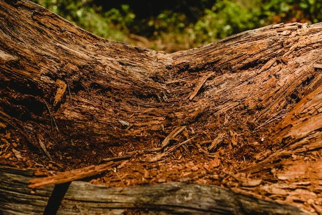 Texturas de madera vieja y envejecida y troncos de árboles