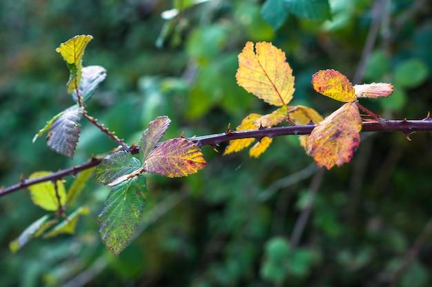 Tiempo de otoño: hojas coloridas