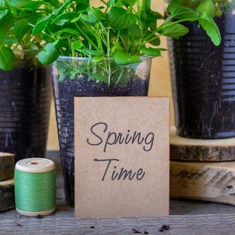 Tiempo de primavera plántula viola