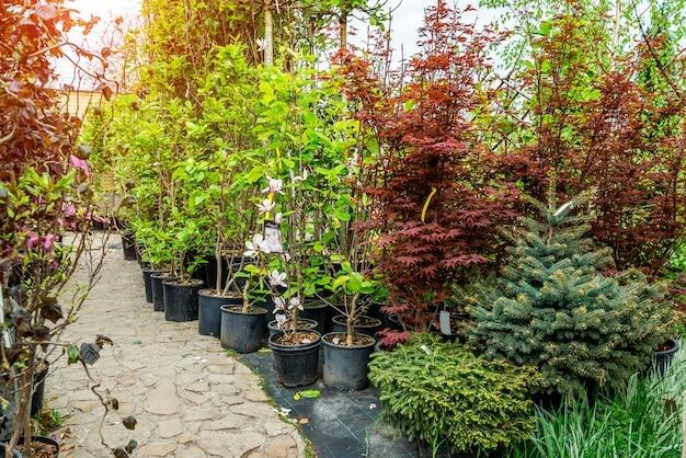 Tienda de jardinería. una hilera de plantas