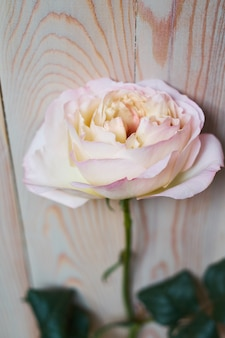 Tierno bodegón con una rosa rosa para el día de la madre o una boda en estilo vintage