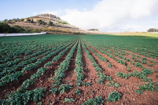 Tierra de agricultura y cielo nublado