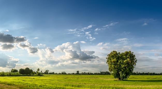 Tierras agrícolas y pastizales con árbol en forma de corazón en escena rural sobre fondo de cielo azul