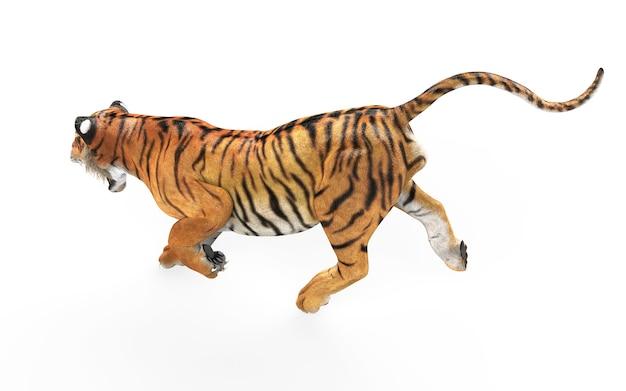 Tigre de bengala peligroso aislado sobre fondo blanco con trazado de recorte