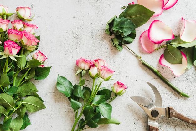 Tijeras de jardín con rosas sobre fondo de hormigón.