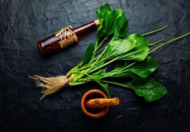Tintura de plátano en botella de vidrio. poción curativa, medicina herbal hierbas homeopáticas
