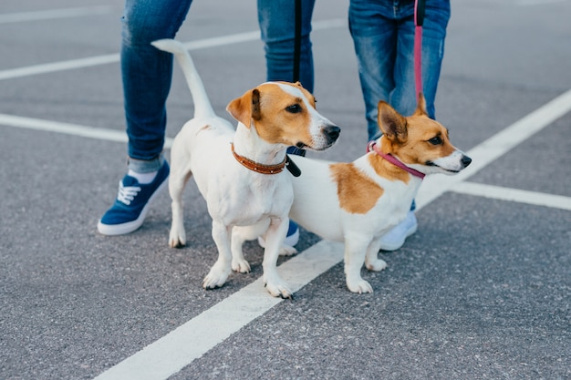 Tiro al aire libre de dos perros de pedigrí con correas tienen a pie, personas irreconocibles están cerca