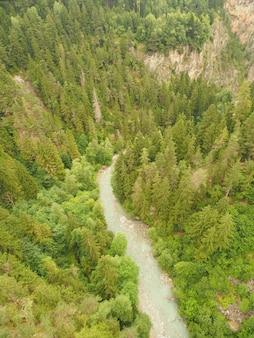Tiro de alto ángulo de un bosque de pinos con corriente de agua corriente