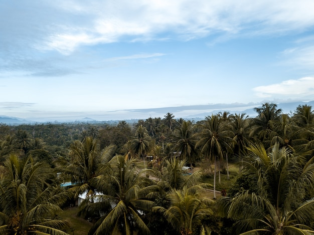 Tiro de alto ángulo de palmeras bajo un cielo nublado azul