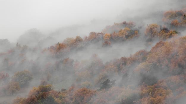Tiro de ángel alto de una niebla en los bosques de montaña
