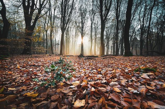 Tiro de ángulo alto de hojas de otoño rojas en el suelo en un bosque con árboles