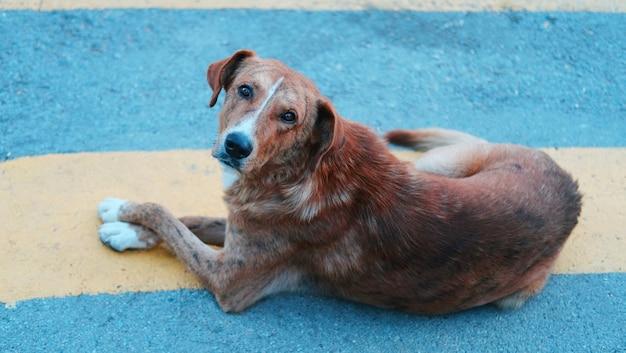 Tiro de ángulo alto de un perro marrón tirado en el suelo y mirando hacia arriba bajo la luz del sol