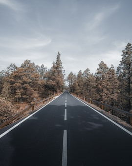 Tiro de ángulo alto vertical de una carretera rodeada de árboles bajo el cielo gris nublado