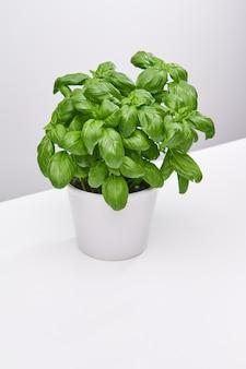 Tiro de ángulo alto vertical de una hermosa planta en un jarrón blanco sobre una superficie blanca