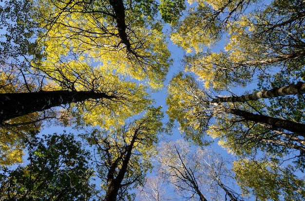 Tiro de ángulo bajo de las flores altas contra el cielo azul en un día soleado