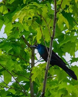 Tiro de ángulo bajo de un hermoso cuervo en la rama de un árbol