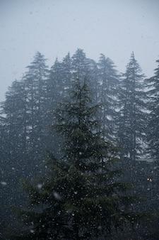 Tiro de ángulo bajo de los hermosos pinos capturados durante las nevadas