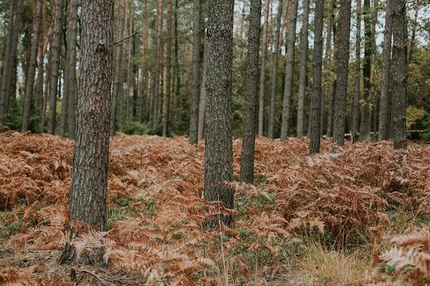 Tiro de ángulo bajo de ramas de helecho avestruz que crecen en el suelo de un bosque de abetos