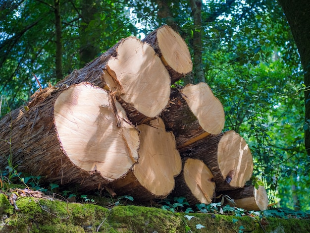 Tiro de ángulo bajo de troncos apilados con vegetación en el fondo