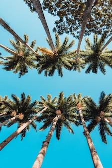 Tiro de ángulo bajo vertical de las palmeras en el jardín botánico de río