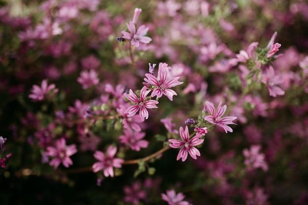 Tiro cercano de flores rosas claras con un natural borroso