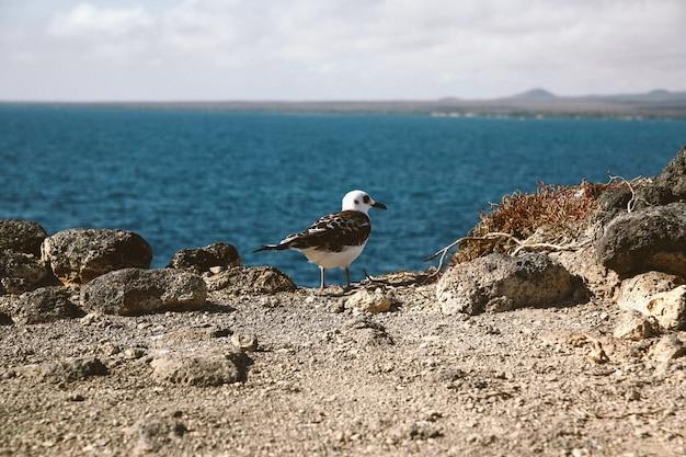 Tiro cercano de una gaviota con un pico negro de pie sobre un acantilado con un mar borroso