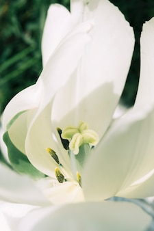 Tiro de macro de una flor delicada blanca