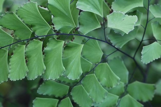 Tiro horizontal del primer de hojas verdes hermosas