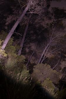 Tiro iluminado de bosque en la noche
