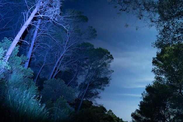 Tiro de larga exposición en bosque