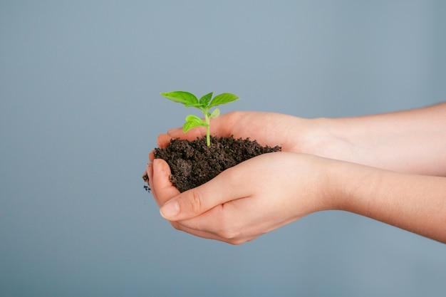 Tiro del primer de una mujer que sostiene una planta verde en la palma de su mano. de cerca