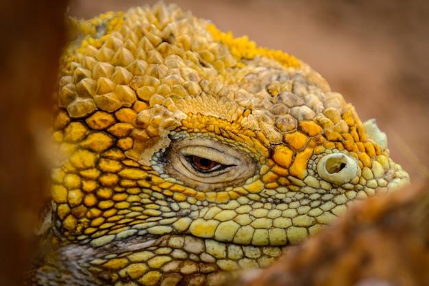 Tiro de primer plano ligeramente enfocado de una iguana amarilla