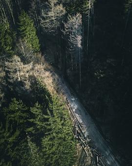 Tiro vertical de alto ángulo de un camino a través del bosque